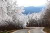 Winter Dream - Queen Wilhelmina State Park