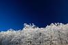 Icy Jewels - Queen Wilhelmina State Park