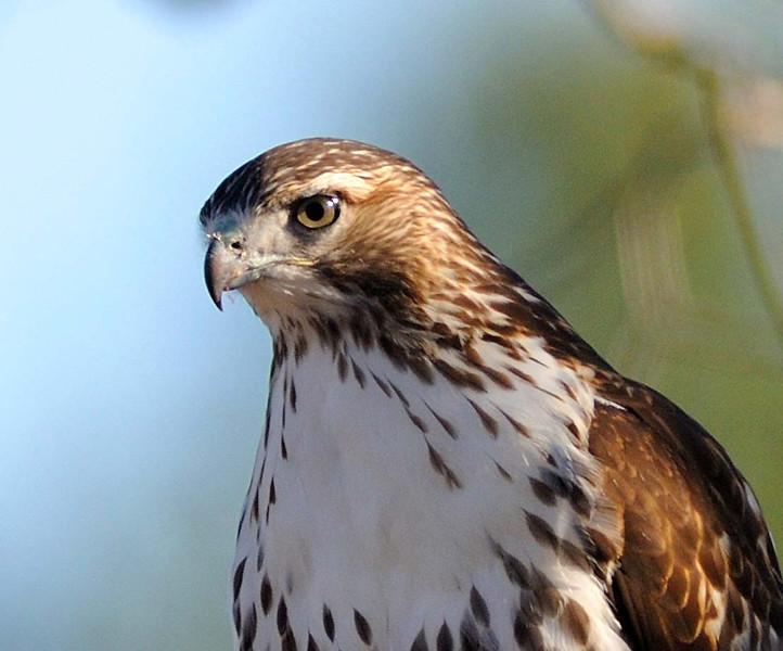 Greenwich Audubon Nov 13 2016 (10)