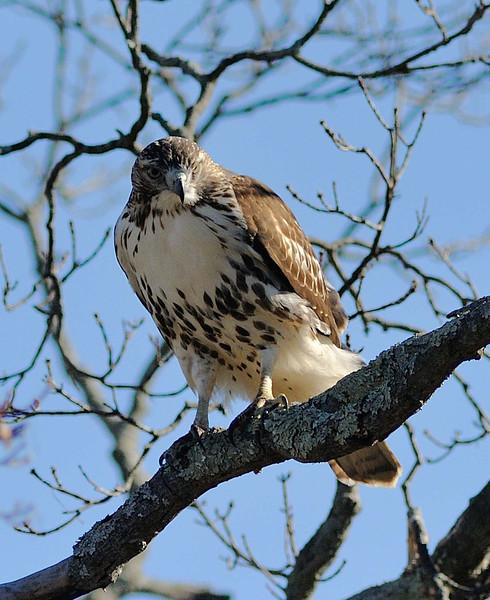 Greenwich Audubon Nov 13 2016 (13)