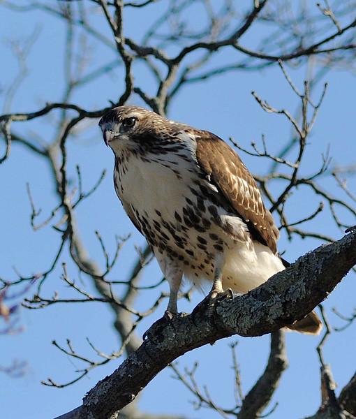 Greenwich Audubon Nov 13 2016 (16)