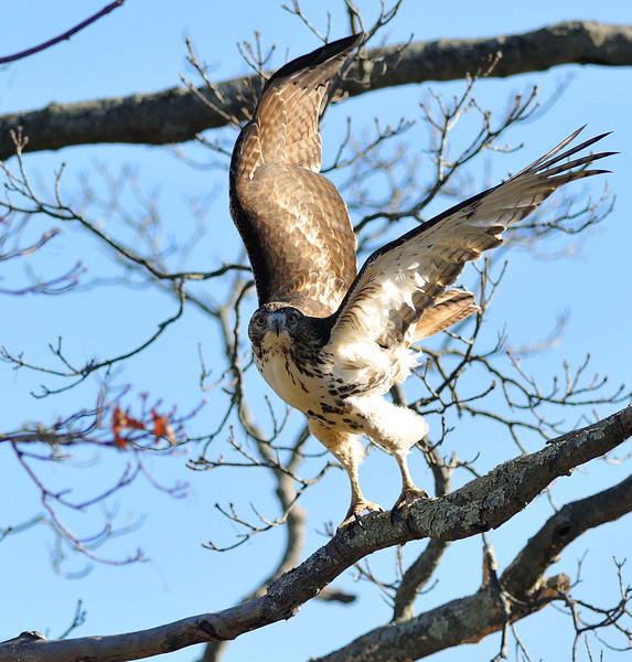 Greenwich Audubon Nov 13 2016 (22)