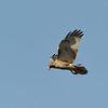 Greenwich Audubon Nov 13 2016 (28)