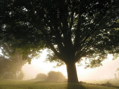 This beautiful old tree, this Hill, this light, and ever present Spirit.