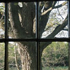 And the same tree through a window of the old farmhouse.
