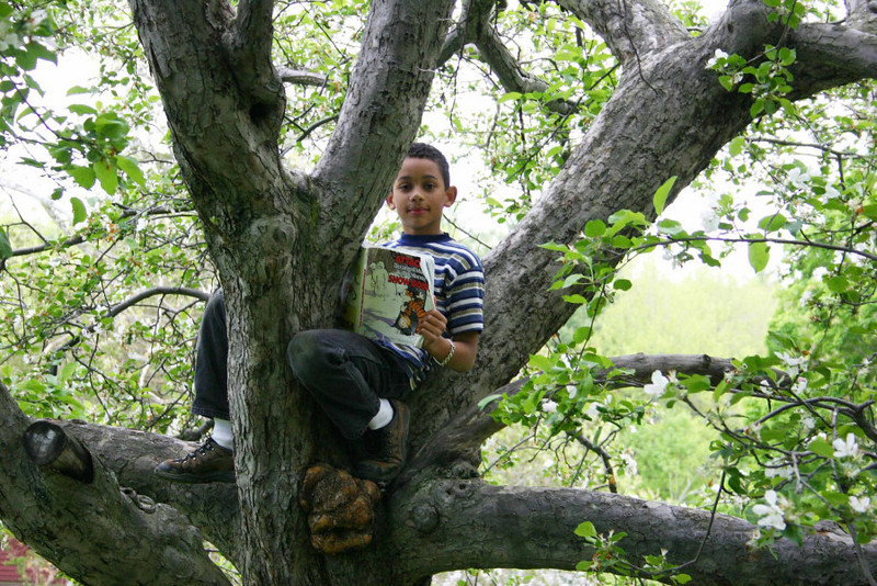 There are  trees here...made for climbing, and reading a good book!