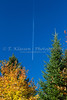 A jet contrail with fall foliage in La Mauricie National Park, Quebec, Canada.