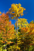 Maple trees in full fall color in La Mauricie National Park, Quebec, Canada.