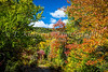 Brilliant fall foliage color in the mountains of Mont Tremblant National Park, Quebec, Canada.