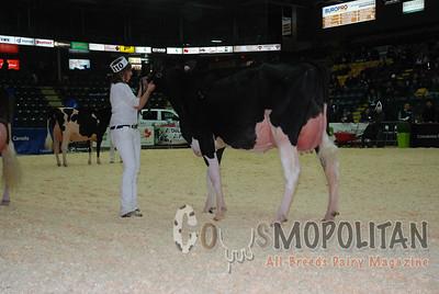 Quebec Spring Holstein Cows 15