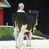 Quebec_Spring_Jnr_Holstein_Show_2016_L32A8635