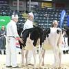 Quebec_Spring_Jnr_Holstein_Show_2016_L32A8601