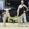 Quebec_Spring_Jnr_Holstein_Show_2016_L32A8638