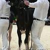 Quebec_Spring_Jnr_Holstein_Show_2016_L32A8564