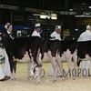 Quebec_Spring_Jnr_Holstein_Show_2016_L32A8558