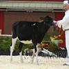 Quebec_Spring_Jnr_Holstein_Show_2016_L32A8544