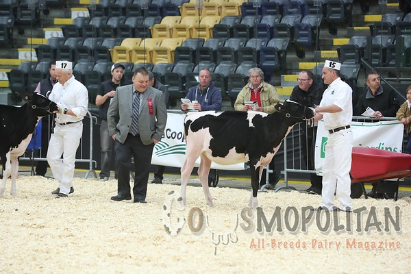 Quebec_Spring_Jnr_Holstein_Show_2016_L32A8548