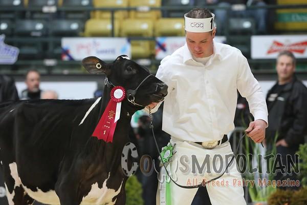 Quebec_Spring_Jnr_Holstein_Show_2016_L32A8588