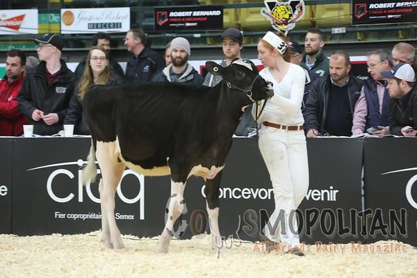 Quebec_Spring_Jnr_Holstein_Show_2016_L32A8611