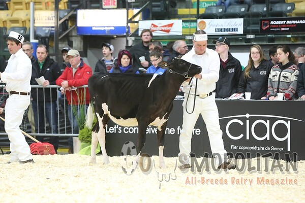 Quebec_Spring_Jnr_Holstein_Show_2016_L32A8569