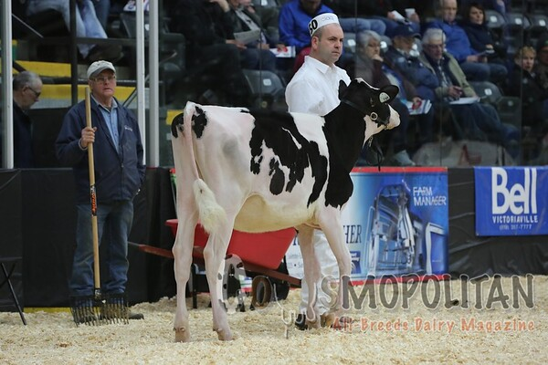 Quebec_Spring_Jnr_Holstein_Show_2016_L32A8623