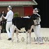 Quebec_Spring_Jnr_Holstein_Show_2016_L32A8545