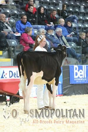 Quebec_Spring_Jnr_Holstein_Show_2016_L32A8620
