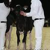 Quebec_Spring_Jnr_Holstein_Show_2016_L32A8565