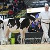 Quebec_Spring_Jnr_Holstein_Show_2016_L32A8641