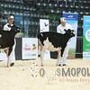 Quebec_Spring_Jnr_Holstein_Show_2016_L32A8541