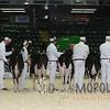 Quebec_Spring_Jnr_Holstein_Show_2016_L32A8560