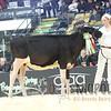 Quebec_Spring_Jnr_Holstein_Show_2016_L32A8640