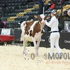 Quebec_Spring_Show_Red&White_2016_L32A8184