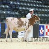 Quebec_Spring_Show_Red&White_2016_L32A8183