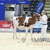 Quebec_Spring_Show_Red&White_2016_L32A8182