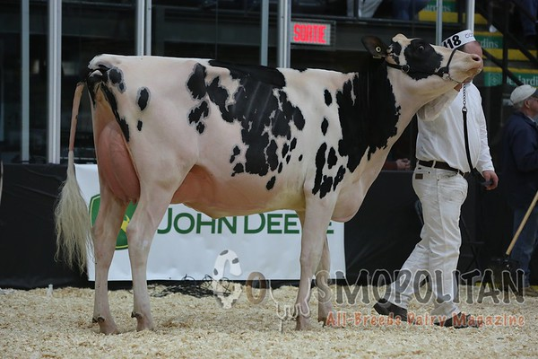 Quebec_Spring_Snr_Holstein_Show_2016_L32A9024