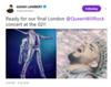 ADAM LAMBERT Verified account @adamlambert  Ready for our final London @QueenWillRock concert at the 02!!