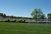 2019-04-27 Queen's Cup Steeplechase kbd_2144