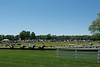 2019-04-27 Queen's Cup Steeplechase kbd_2146