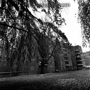 """East side of FHS, under Weeping Beech tree, Fall of 1973. In the background are the Northern Apartments (built in 1957), North Bowne Chemists, """"Pagoda"""" fast food and Hearing Aid store - still there in 2008!"""