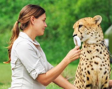 AZ 02 Cheetah