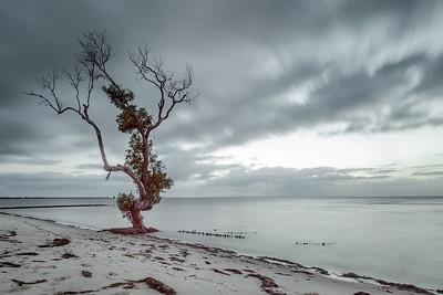 BB 12 - Beachmere Mangrove
