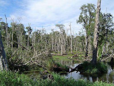 Wetlands @ Redlands