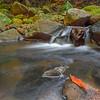 GC 37 The Orange Leaf