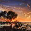 HB 13 The Vernaka Tree 1