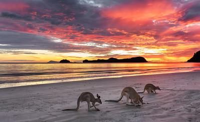 NQ 01 Wallaby Sunrise
