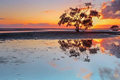 NB 02 Nudgee's Sunrise Tree