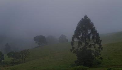 SC 05  Maleny Mist