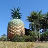 The Big Pineapple - Sunshine Coast