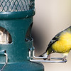 Male Goldfinch at our feeder